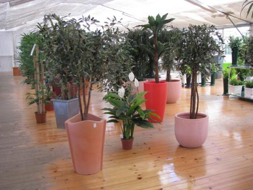 Plantas de interior em vasos grandes flor do norte com rcio de plantas e flores - Plantas de interior grandes ...