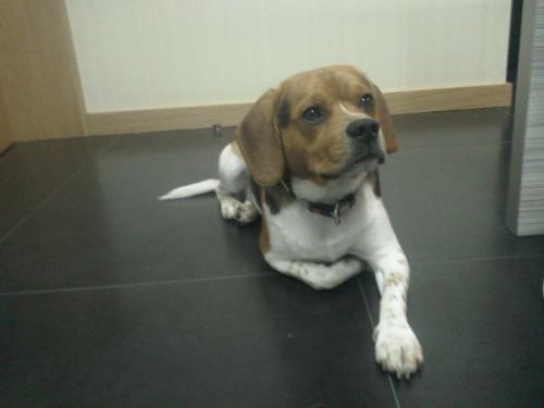 img-Seguro Responsabilidade Civil de Cães