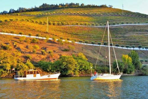tt2-DOURO CRUISE WITH TASTINGS AND LUNCH ON THE DOC1 thumbs