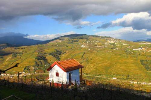 tt3DOURO CRUISE WITH TASTINGS AND LUNCH ON THE DOC2 thumbs