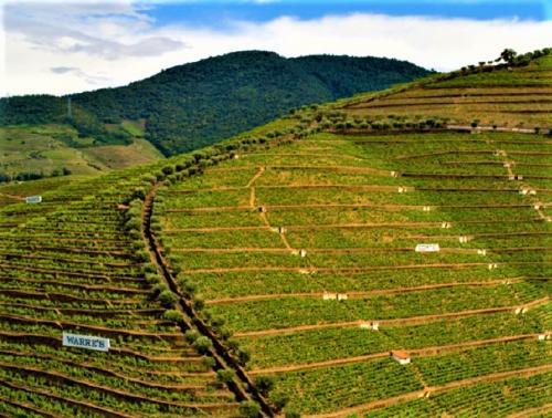 destaque Experiência do Vinho no Vale do Douro