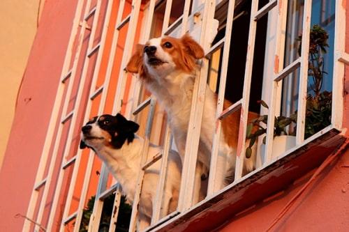 img-Seguro Responsabilidade Civil de Cães Tranquilidade