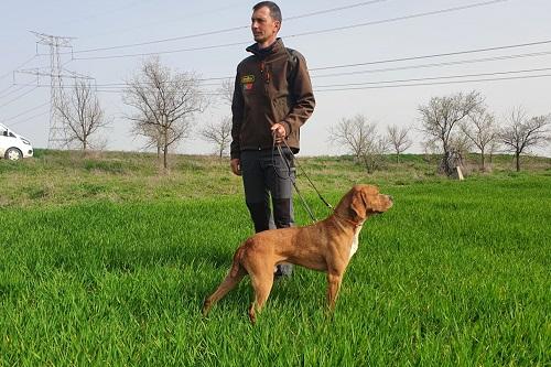 Cães iniciados disponíveis
